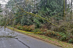 Wind damage in Olympia on Cooper Point near 62nd Avenue NW. (Puget Sound Energy) Tags: seattle trees usa snow storm tree loss lines electric high energy power unitedstates wind utility stormy down line pole wash sound damage electricity olympia restoration powerline poles winds gusts puget pse outage downed pugetsoundenergy pugetpower