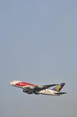SQ0317 LHR-SIN (A380spotter) Tags: london climb sticker colours heathrow airbus a380 decal 50th departure sq takeoff 800 gim sia 50thanniversary lhr nationalday singaporeairlines livery 2015 egll climbout 27r runway27r lhrsin 9vski msn0034 sq0317 sg50 gearinmotion majulahsingapuraourgoldenjubilee singaporegoldenjubilee