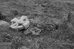 A fallen Cross and Angel (IanAWood) Tags: pinner londoncemeteries londonboroughofharrow walkingwithmynikon nikkorafs24mmf14g pinnercemetery nikondf