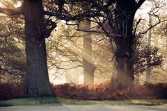 (andrew evans.) Tags: morning sun mist misty sunrise landscape golden early nikon rays sunrays d3