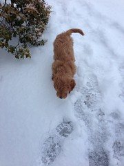 biscuits-in-the-snow_16637841331_o