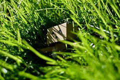 This little dude (vetle.vestlund) Tags: thegrassisalwaysgreener grass d5200 nikond5200 nikon danbo