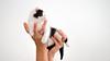 diva (AnteKante) Tags: cat katze macka macic kätzchen schwarz weis smoky smokey hand hände arme arms hands ruke ruka miau mietz milou
