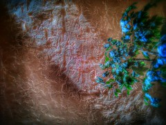 (ThePolaroidGuy [CensoredϟRestricted]) Tags: naturallight availablelight outdoors wall plant green bluegreen peach diagonal light sarasota florida blue surreal edwarddrake edward drake edwarddrakemfa thepolaroidguy ed photographer masterphotographer