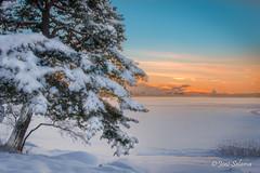 Sunset @ Tarvo (Joni Salama) Tags: lumi hdr maa luonto auringonlasku meri talvi puu valo photoshop tarvo espoo suomi vesi uusimaa finland fi snow nature sunset sea winter tree light landscape
