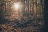 Couleurs automnales (dono heneman) Tags: couleurs colors automnales automne autumn paysage landscape végétal vegetal végétation forêt forest tronc trunk arbre tree feuille leaf coucherdesoleil sunset nature legâvre loireatlantique paysdelaloire france soleil sun lumière light pentax pentaxart pentaxk3