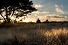 Winter Landscape ? - Posbank (Ben Garssen) Tags: posbank veluwezoom gelderland dieren dier landschap landscape land boom tree trees sun winter cold clouds nikon d5200 70300 grass gras