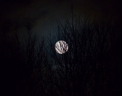 Through the branches (Laineyb93) Tags: moon moonphase wintermoon nikon night nightsky tree branches nature light circle january waxinggibbous waxing gibbous patterns clouds lunar