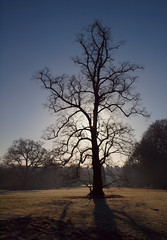 2016_12_0608 (petermit2) Tags: clumberpark clumber sherwoodforest sherwood nottinghamshire nationaltrust nt