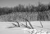 Nature morte (Papaye_verte) Tags: arbre streetphotography winter tree snow neige montréal québec canada