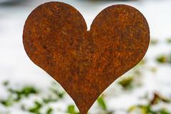 Don't Let The Teardrops Rust Your Shining Heart (M Lang) Tags: liebe rost heart herz braun love dontlettheteardropsrustyourshiningheart macromonday rust inspiredbyasong marcomondays macro mondays
