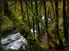 Bridal Veil Trail (Ernie Misner) Tags: f8andbeinthegorge columbiarivergorge gorge bridalveilfalls oregon erniemisner nikond810 d810 lightroom nik capturenx2 cnx2 saturationblendingmode hoyahd3polarizer