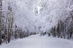 Winter Road (Sara Gray Photography) Tags: winter snow road landscape snowylandscape texture topaz topazimpression photomanipulation digitalart photoart