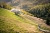 Blooming season (CreArtPhoto.ro) Tags: grass spring inflorit blossom verdecrud trees inverzit padure tree magura fence copaci green white yellow verde copac