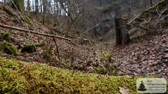 Moos auf dem Baumstamm