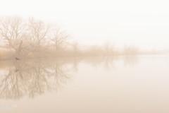 Foggy Morning (JLDMphoto) Tags: nikon d7200 35mmf18 landscape waterscape fog foggy water lake trees tree rural kansas goldenhour nature