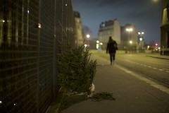 Sapin des rues. (.Rgsoixantedixhuitclan.) Tags: paris nuit sapin arbre street inexplore night tree rue photographers