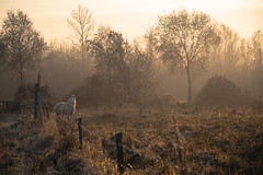 5915 (filzofi) Tags: paysage landscape tree poney hiver arbre cheval country pony horse campagne winter