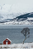 l'arbre et la cabane (mimu_13) Tags: europe n norvège norway tromsfylke tromso tromsø neige snow snø maison maisonrouge redhouse nx500 samsungnx hiver winter vinter