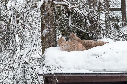 2015_02_Lapland_317