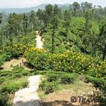 Little Adam's Peak Walking Trail, Ella thumbnail