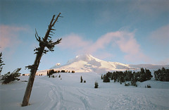 a farewell to winter, part three (manyfires) Tags: film analog winter snow landscape nikonf100 35mm oregon pnw pacificnorthwest mthood timberline sunrise tree mountain