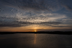 Birds flying high, you know how I feel.. (M. Bublé) (CarolienCadoni..) Tags: sonyslta99 sal2470z sony sun sundown sunset sky reflection lake buinen drenthe nederland netherlands birds