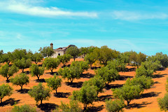 Alentejo (José Diogo Lages Machado Marques Figueira) Tags: blue sky house tree art portugal nature beautiful rural spain order hiking geometry farm traditional hill olive hills math oil alentejo perfection simetry oliveira