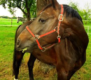 Visual contact  by both horses