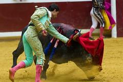 DSC_9342.jpg (josi unanue) Tags: animal blood spain bull arena bullfighter sansebastian esp toro traje asta sangre espada bullring unanue guipuzcoa matador torero tauromaquia sufrimiento cuerno urea banderilla banderilero