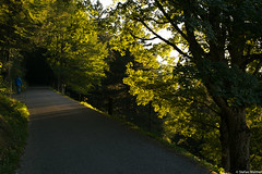 walk in the evening (picturesbywalther) Tags: trees light leaves way evening abend licht walk bltter bume weg gehen draussen spaziergang