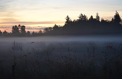 Morning Mist (careth@2012) Tags: morning mist grass silhouette sunrise nikon scenery view britishcolumbia scenic scene telephoto naturephotography 55300mm d3300