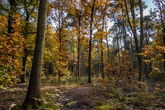 Is anything better than autumn days? (Peter Jaspers (busy at the moment)) Tags: autumn trees fall colors forest herfst olympus sbb hike panasonic bos lagevuursche 2015 staatsbosbeheer 20mm17 frompeterj