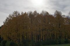 Floriade_251015_13 (Bellcaunion) Tags: park autumn fall nature zoetermeer rokkeveen florapark