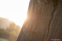 Hatfield_Forest-15 (Eldorino) Tags: park uk morning autumn trees nature forest sunrise landscape countryside nikon britain centre jour hatfield bishops stortford essex hertfordshire stanstead hatfieldforest