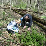 Two students analyzing organisms on the ground in the college woods.
