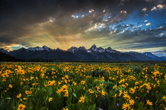 Teton Rays (Vision & Light Photo) Tags: sunset mountain mountains color green nature beauty field yellow clouds sunrise landscape rockies outdoors photography dawn landscapes photo nationalpark scenery dusk vibrant fineart scenic peaceful peak photograph rockymountains serene wildflowers rays wyoming grandtetons wilderness teton tetons sunrays wildflower sunbeam grandteton tranquil cloudscape fineartphotography grandtetonnationalpark mountainpeak antelopeflats