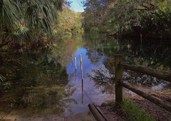 Silver River- Ocala, Florida (johnandmary.F) Tags: ocalafl silverspringsstatepark artisansprings
