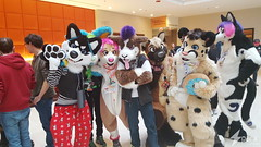 Sparx Traxx (SparxTraxx) Tags: west furry husky bass furries mid sparx traxx fursuit 2015 furryfandom hesky hesk furfest fursuiting sparxtraxx basshusky
