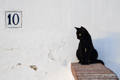 Gato negro - Black cat - Gatto nero (Álvarez Bonilla) Tags: málaga familia otoño vacaciones bianco blanco white cat gato gatto negro nero black ten diez dieci número number pared wall
