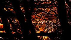 Winter Solstice sunset 2007 (hz536n/George Thomas) Tags: 2007 canon30d ef300mmf4lisusm sunset solstice trees stillwater oklahoma winter copyright nik cs5 sky