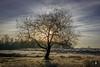Surae,....Morning Sky. (@FTW FoToWillem) Tags: tree trees nature natuur sun sunrise zon zonsopkomst surae wolken wolk sky lucht landscape landschap holland hollanda holandes holande hollande netherlands nationalpark vorst fall autumn winter winter2016 ftw fotowillem willemvernooy nederland europe morning landschapfotografie boom noordbrabant brabant