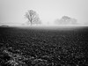 Campagne hivernale. (steph20_2) Tags: panasonic lumix gh3 monochrome monochrom picardie ois campagne countryside champ field m43 noir noiretblanc ngc blanc black bw white skanchelli arbre tree brouillard brume hiver winter 20mm