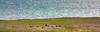 IMG_5178-1 (Andre56154) Tags: spanien espana spain andalusien andalusia blume flower weide wiese willow kuh cow tier animal wasser water küste coast meer sea ozean ocean atlantik atlantic sonne sun