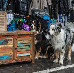 Flea Market Dogs (JonBord) Tags: dog dogs rain israel telaviv jaffa yaffo furniture coat