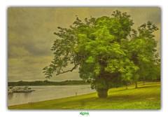 LOUGH KEY (régisa) Tags: roscommon ireland irlande eire lough lac key arbre tree