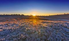 Linwood Sunrise (nicklucas2) Tags: newforest landscape frozen frost seasons winter sun sunrise flare bracken rockfordcommon