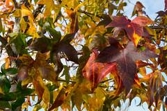 03 (AdrianSanzBer) Tags: nature naturaleza madrid parque otoño autumn hojas leaves trees