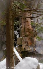 Rockface (maureen.elliott) Tags: hiking winter snowshoeing rock rockface nature snow niagaraescarpment brucetrail