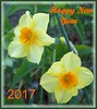 Happy New Year 2017 (ERIK THE CAT Struggling to keep up) Tags: flowers card staffordshire